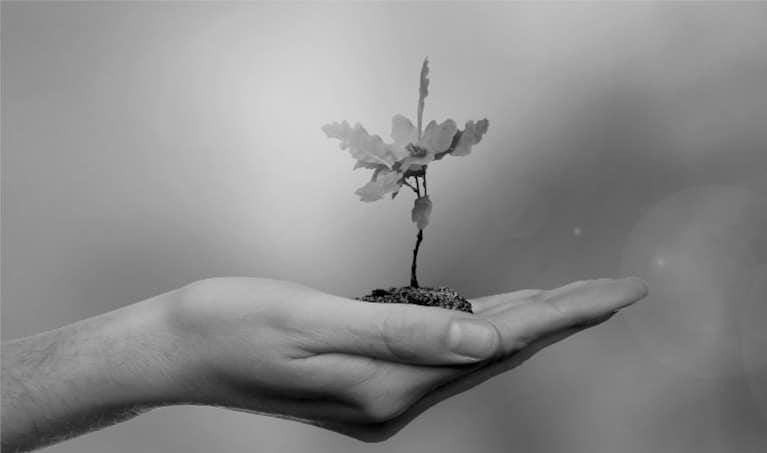 mano tomando un árbol que representa la empresa familiar
